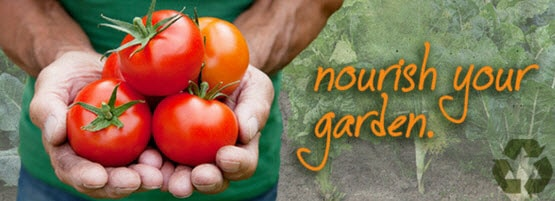 How To Grow Your Own Tomatoes Milorganite