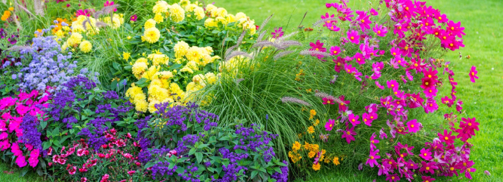 Learn Five Simple Steps To A Healthy And Beautiful Garden Milorganite