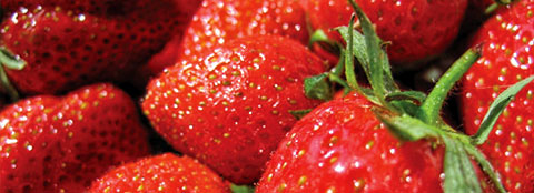 Bright red strawberries like these can be fertilized with Milorganite to give them the nutrition they need.