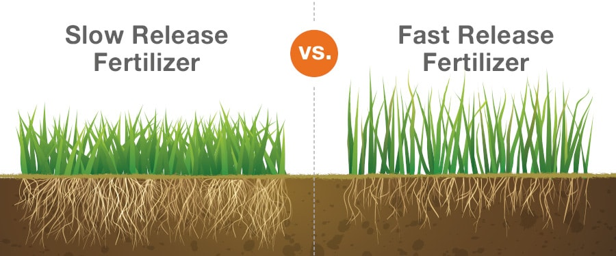 Slow vs Fast Release Fertilizer graphic