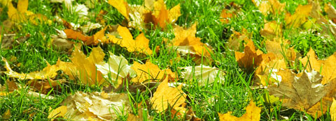 Fall lawn fertilization is important for a healthy lawn.