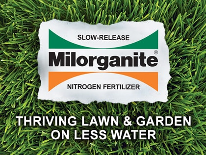 Water Conservation in the lawn and garden