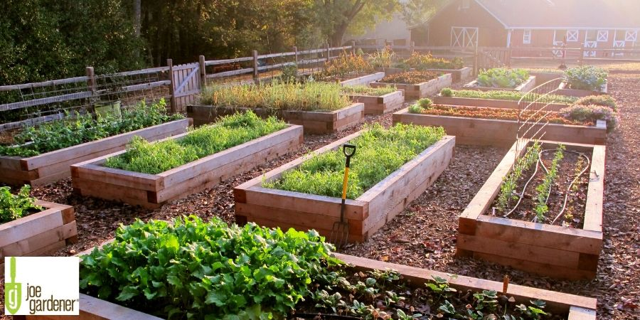 growing raised bed gardens