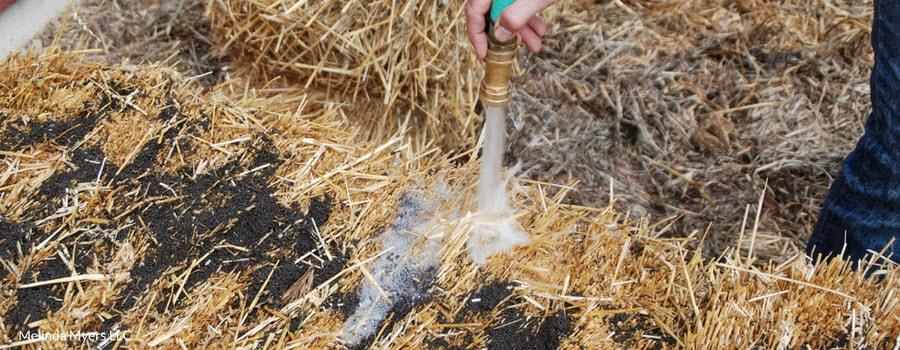 straw bale garden planting create a straw bale garden
