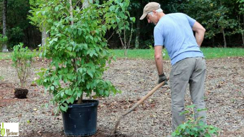 7 Steps to Properly Plant New Trees and Shrubs | Milorganite