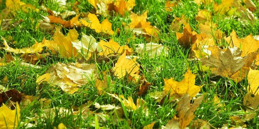 Mow your leaves for a healthy fall lawn