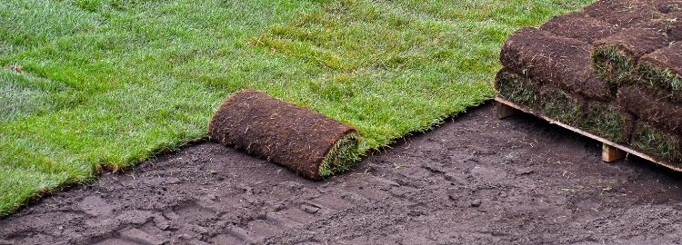 sod getting rolled out from a pallet
