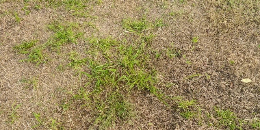 dead patch grass in lawn