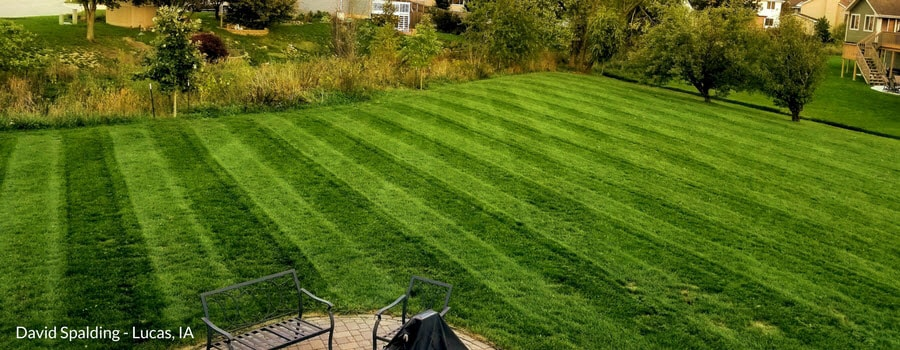 How To Get A Healthy Lawn