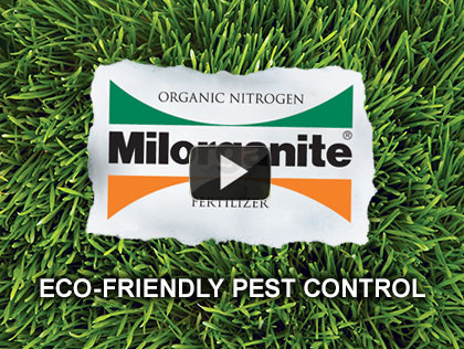 Eco-Friendly Pest Control in the Garden