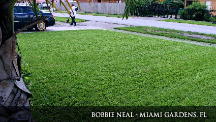 Bright green lawn in Florida, fertilized with Milorganite.