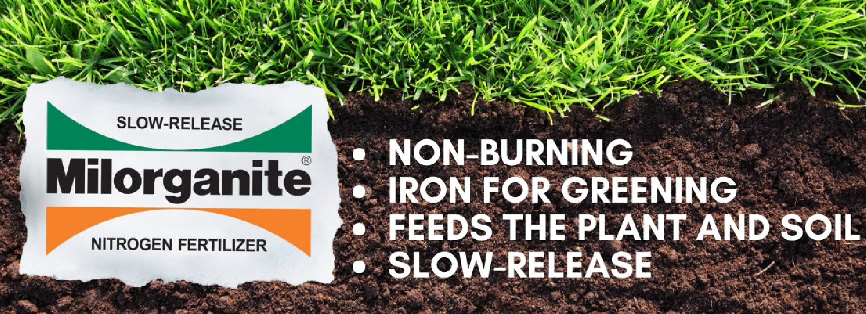 Milorganite fertilizer is made from slow-release nitrogen and feeds for up to ten weeks.