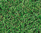 This St. Augustine grass is blue-green with thick, coarse characteristics.