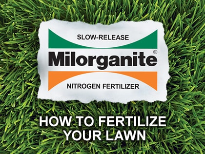 How to fertilize your lawn with Milorganite.