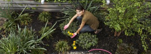 A woman working in her flower garden.