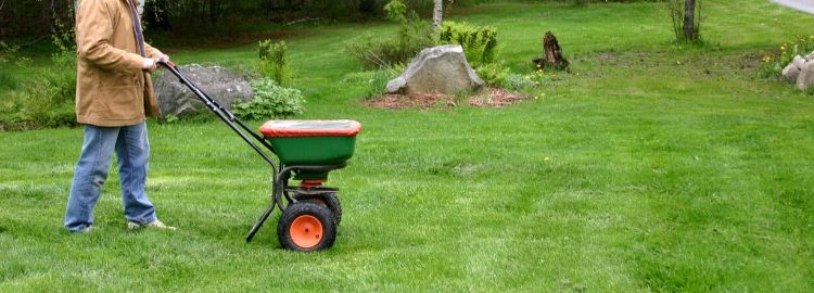 man using grass seed spreader on lawn