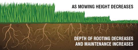 Lawn Mowing Tips Milorganite