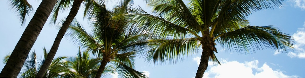 Palm trees against the sky, Milorganite fertilizer has ingrediants like nitrogen that are beneficial to palm tree growth.
