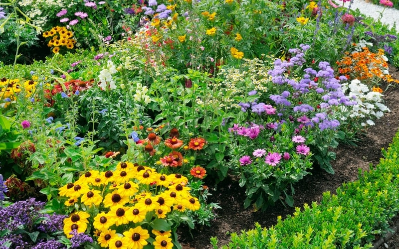 Bright, colorful garden. Here are five steps to a beautiful garden.