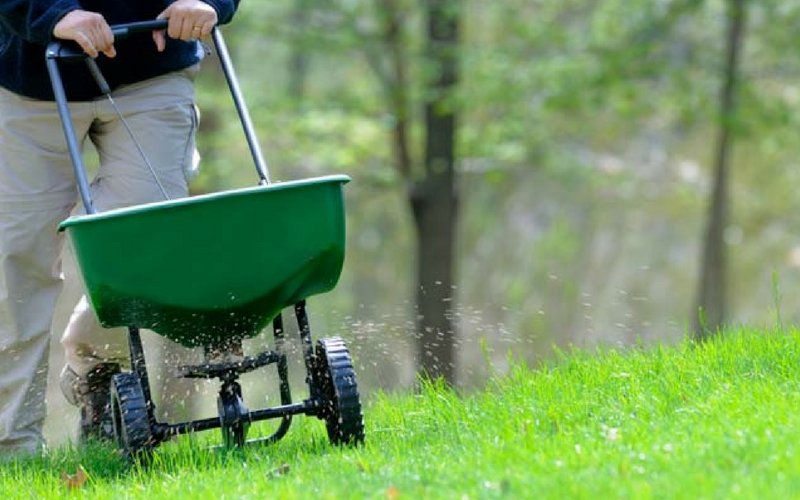 A man using a spreader to put down organic fertilizer on healthy, green grass.