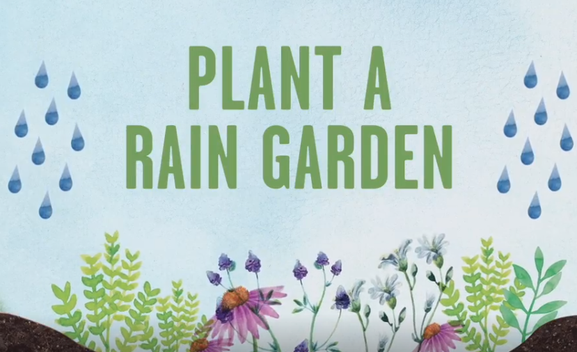 Learn the Benefits of Planting a Rain Garden