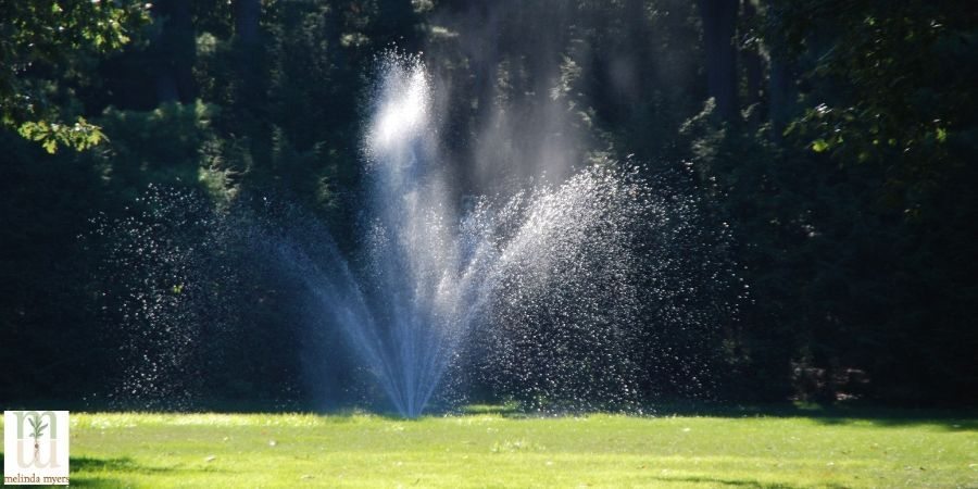 Garden and Lawn watering Do's and don'ts sprinkler
