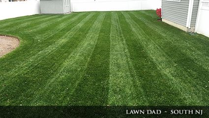 Lush green grass fertilized with Milorganite in New Jersey.