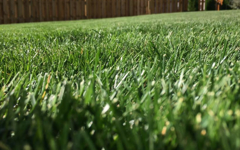 Use these lawn care tips to achieve a lush, green lawn.