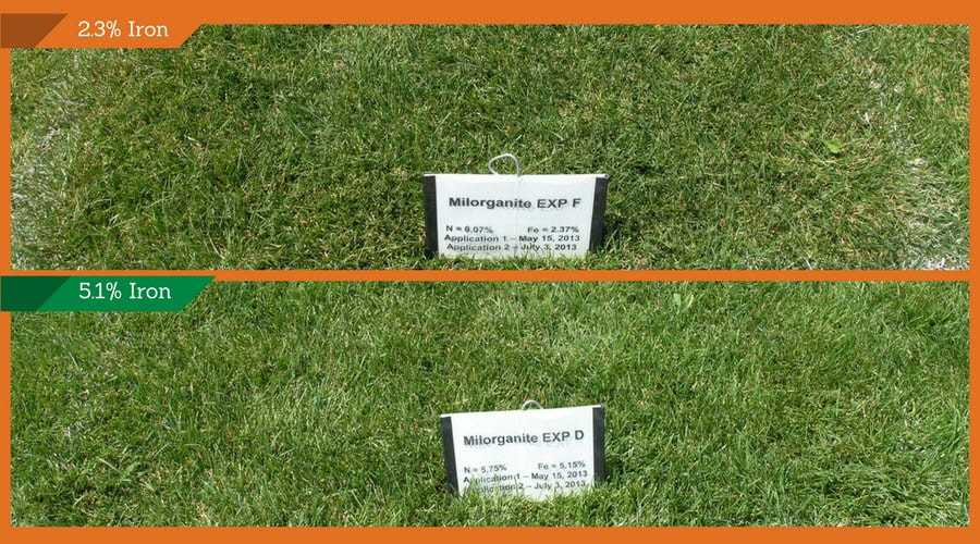 Milorganite Iron Research Test Plots