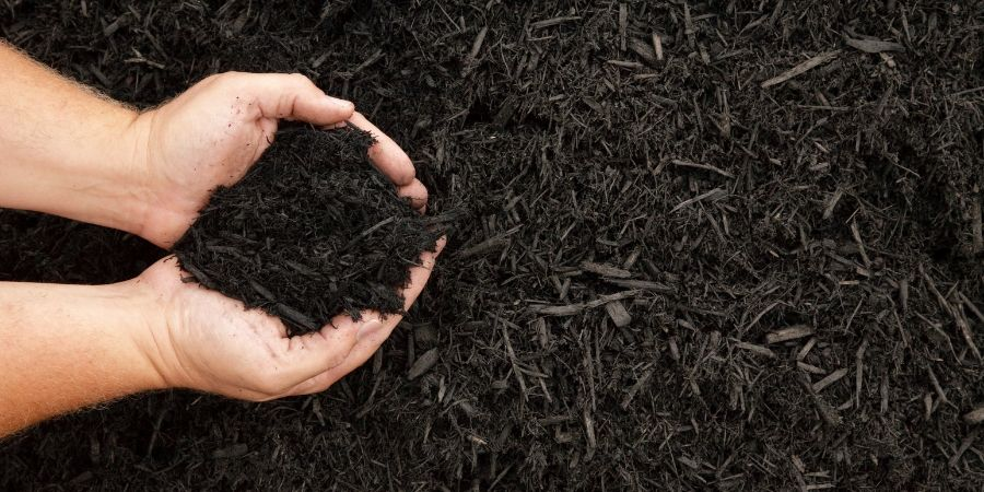 hands holding dark mulch over mulch landscaping