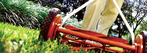Spring lawn care tips will help you get a green and healthy lawn.