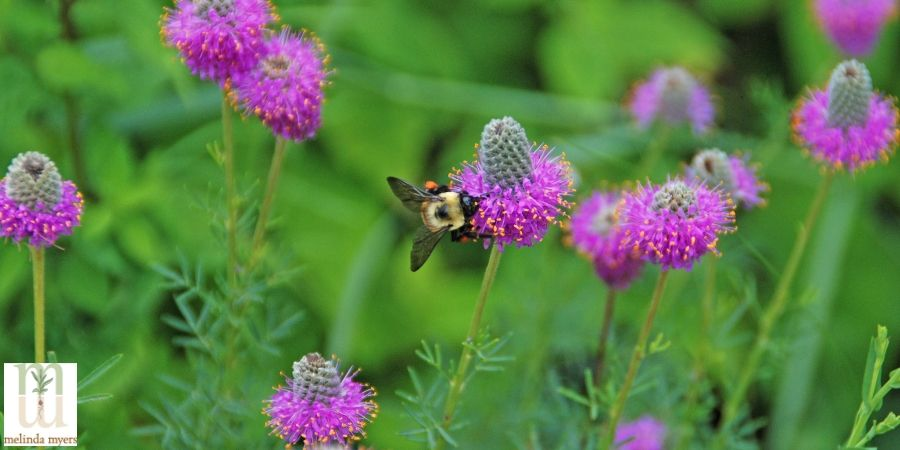 Milorganite Adding Native Plants to Your Landscape Brings Pollinators