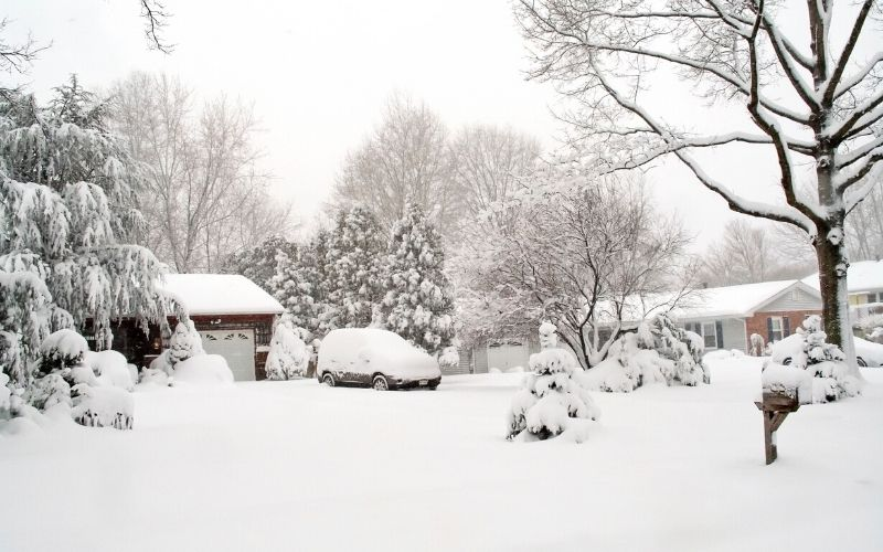 snow over yard and landscape