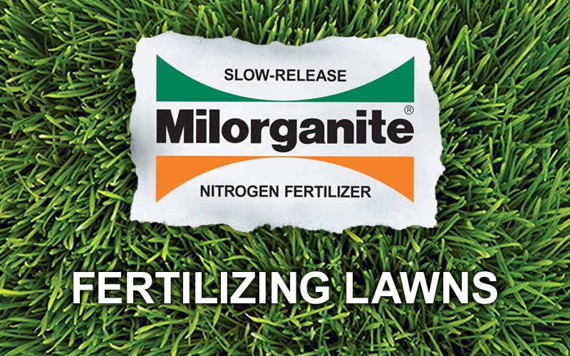 How to Fertilize You Lawn