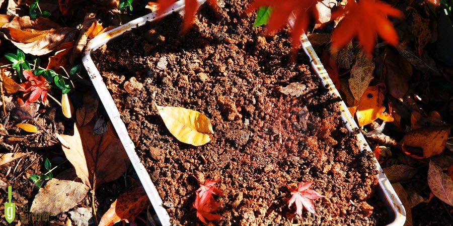 Soil and leaves