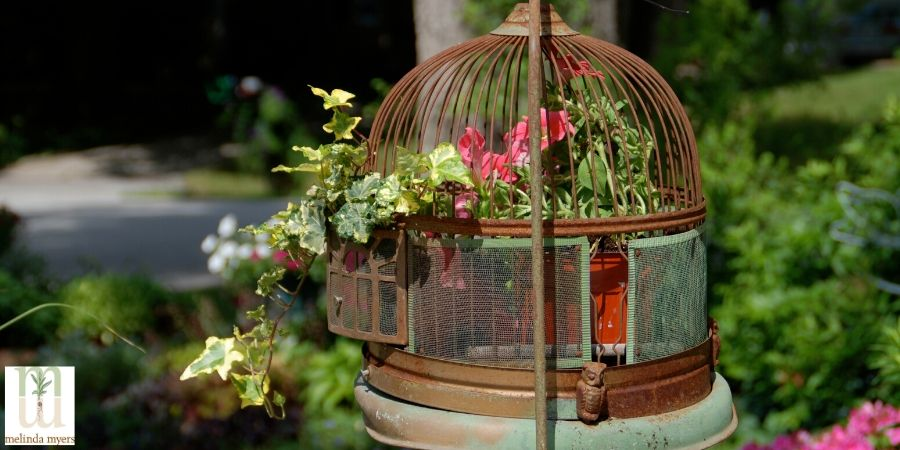 bird cage as a plant holder