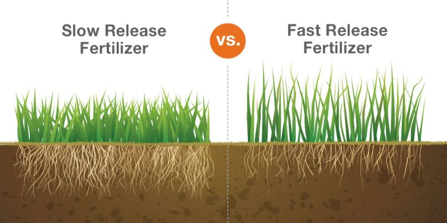 slow release vs fast release fertilizer.jpg