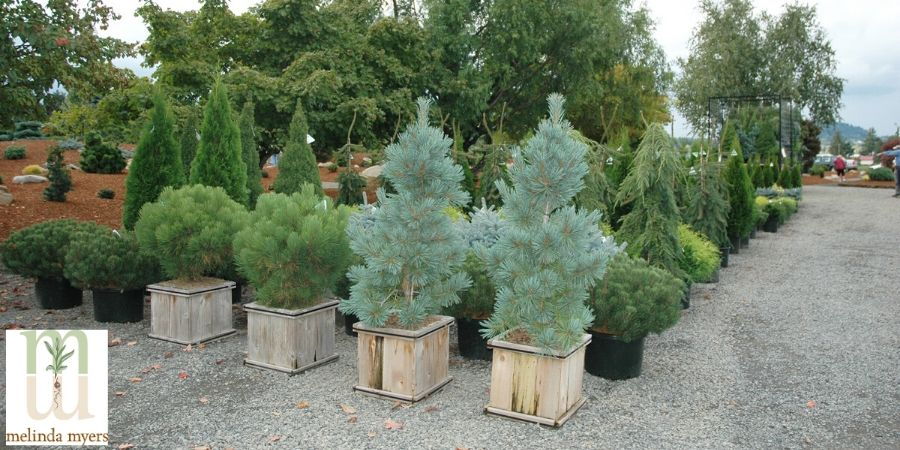 trees and shurbs at a nursery