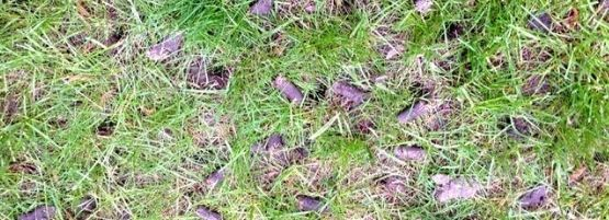 Lawn_Aeration_Tips_Thumbnail555x201-min.jpg