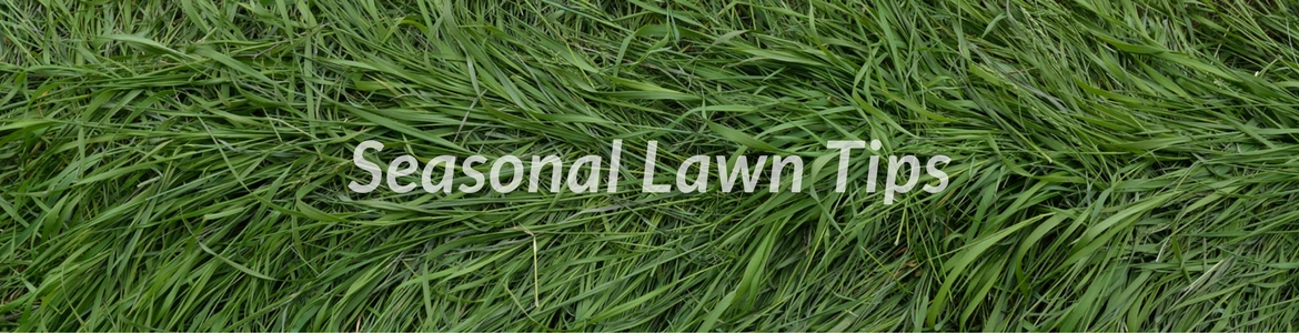 Green, healthy grass with 'Seasonal Lawn Care' written over it.