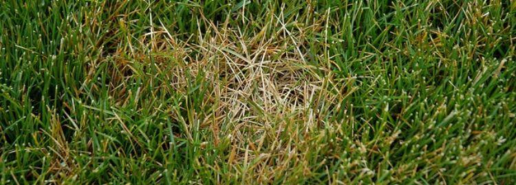 Common Lawn Diseases Milorganite Fertilizer