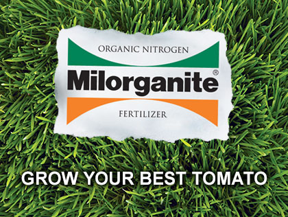 Grow Your Best Tomato Yet