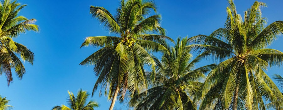 Palm Tree Fertilization Schedule Milorganite
