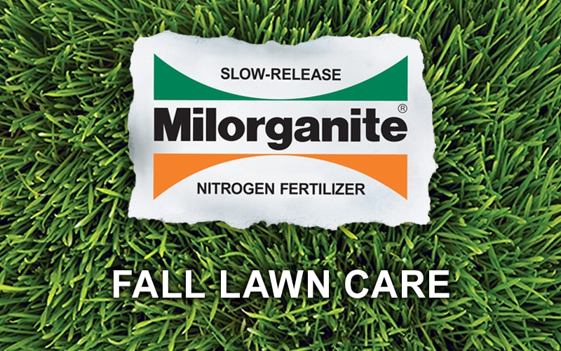 How to Improve Your Lawn in Fall