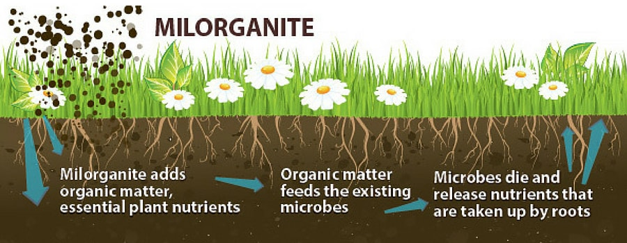 How Milorganite Works in the soil