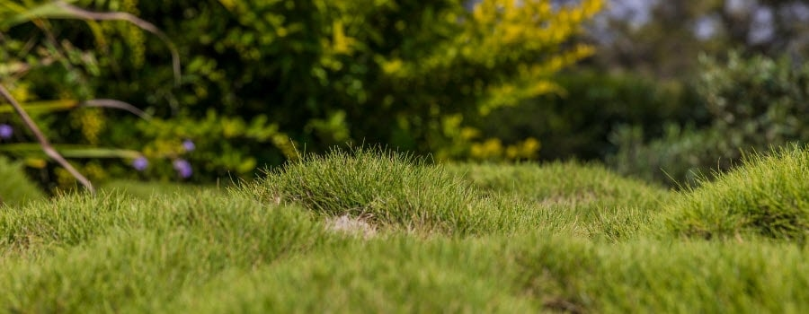 How to Improve a Lumpy Lawn | Milorganite