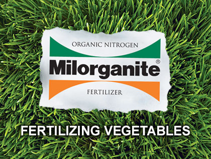 Horticulture expert Melinda Myers explains how to fertilize vegetables with Milorganite.