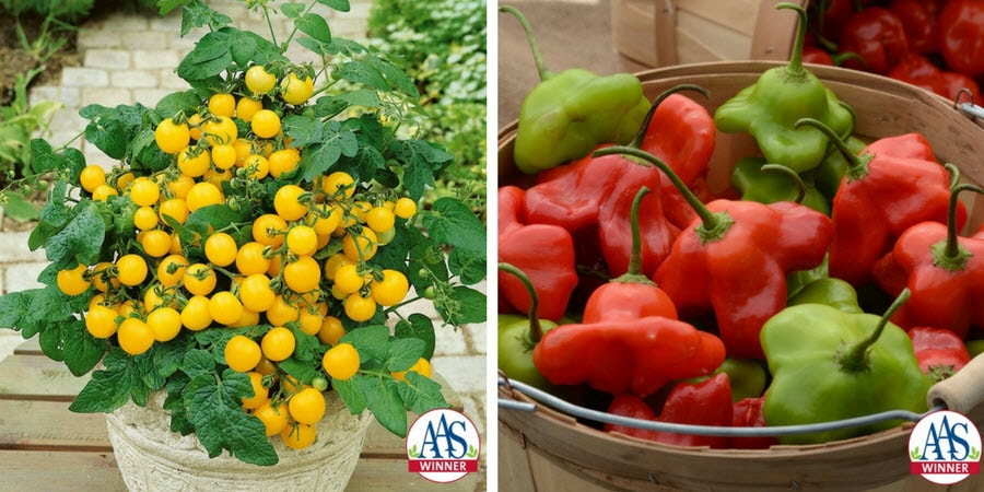 yellow tomatoes and red peppers