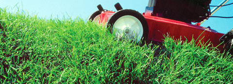 A healthy lawn is being mowed, these lawn care tips will keep your lawn healthy.