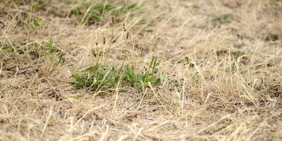 Things to never do to your lawn in summer drought lawn